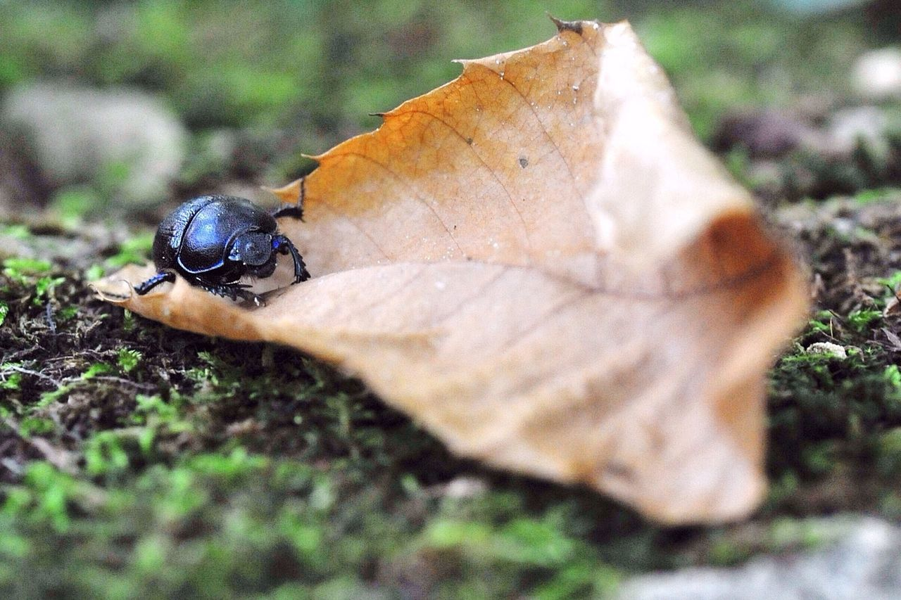 In the forest, beetle walking on the first autumn's colors... Nikon d700 - iso 3200 - 1/200s - F/9 - 90mm. EyeEm Nature Lover Nature_collection EyeEm Best Shots Macro_collection