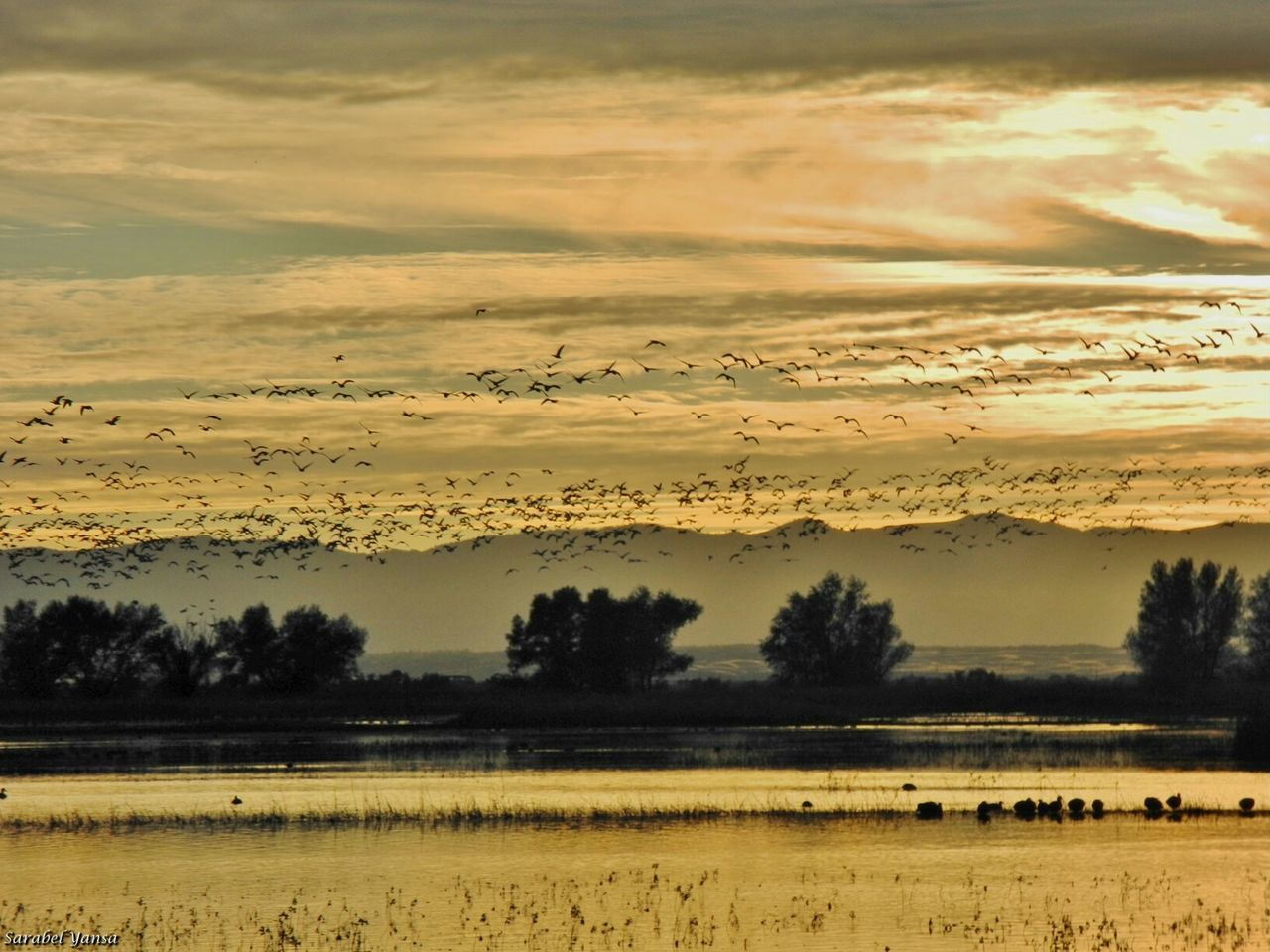 The Great Outdoors - 2015 EyeEm Awards Per Diem Tribute Project Migratory Bird Day Nature_perfection