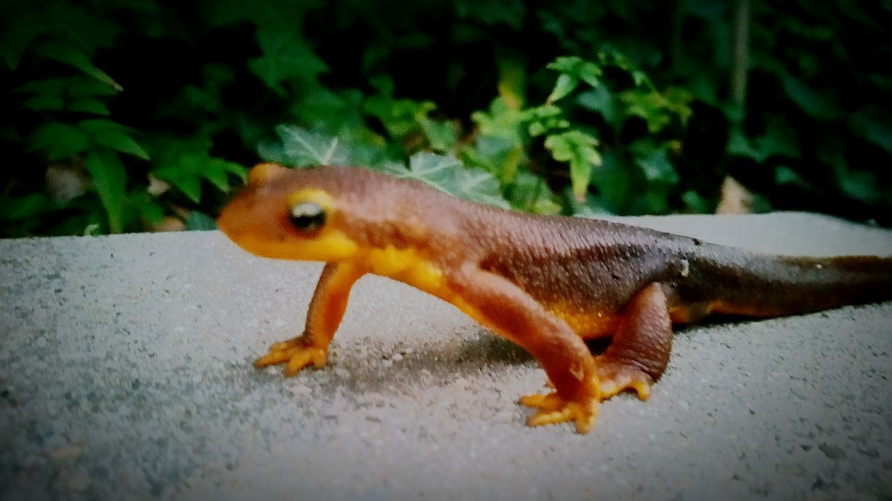 On a mission Wildlife & Nature Reptile Nature On Your Doorstep Lizzard EyeEm Nature Lover EyeEm Best Shots - Nature On A Mission Taking Photos Minimalism Urban Wildlife EyeEm Gallery Simple Things Simple Moment