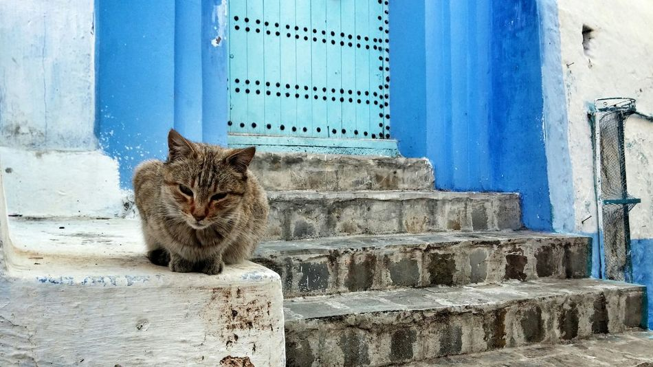 Chefchaouen Morocco Exploring The City Streets Putty Tat Blue City Blue