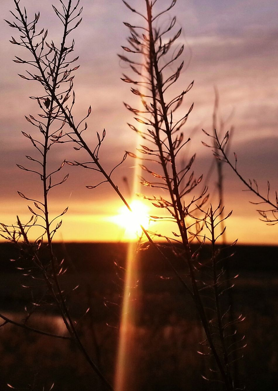EyeEm Nature Lover Sunset_collection Eye Em Best Shots Sunset Silhouettes