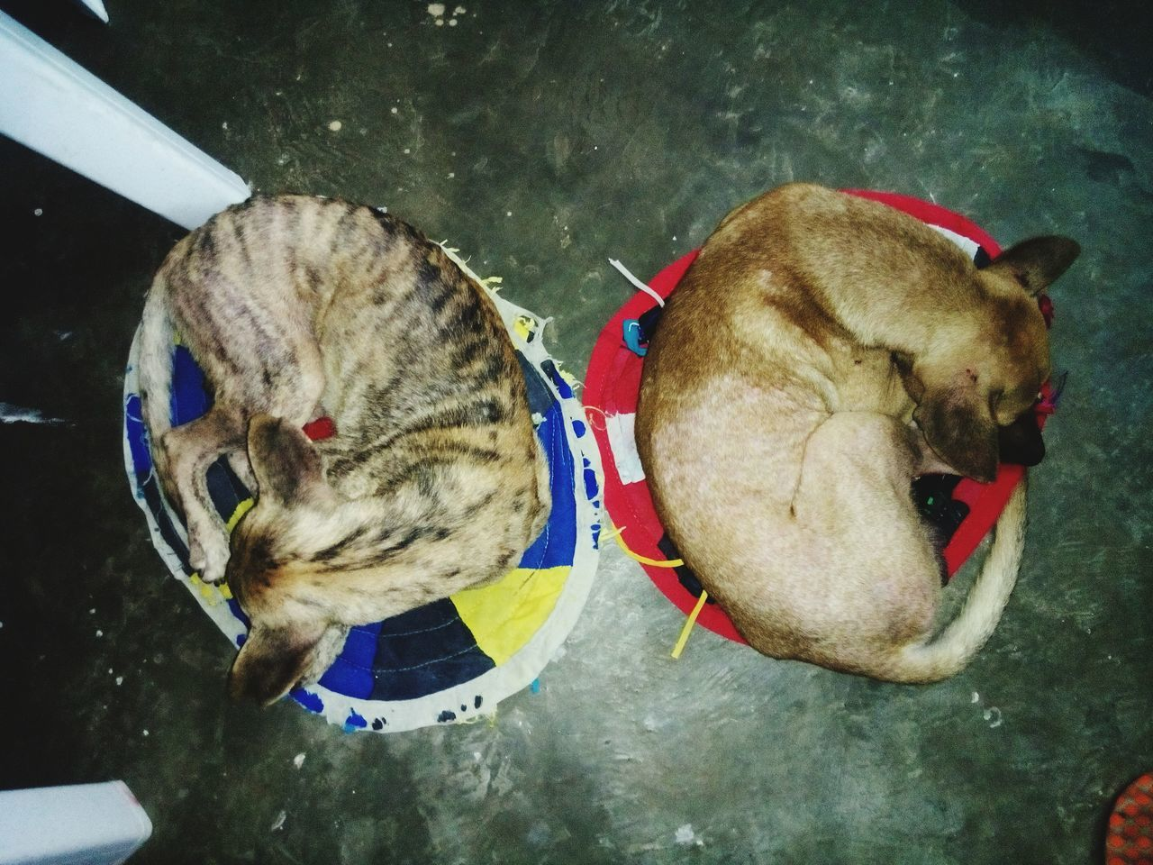The OO Mission meet our two dogs, Iggy and E.C. Aspin Sleeping Cold Days Gooddog Dog Lovers🐾 Small Dogs  Mobilephotography