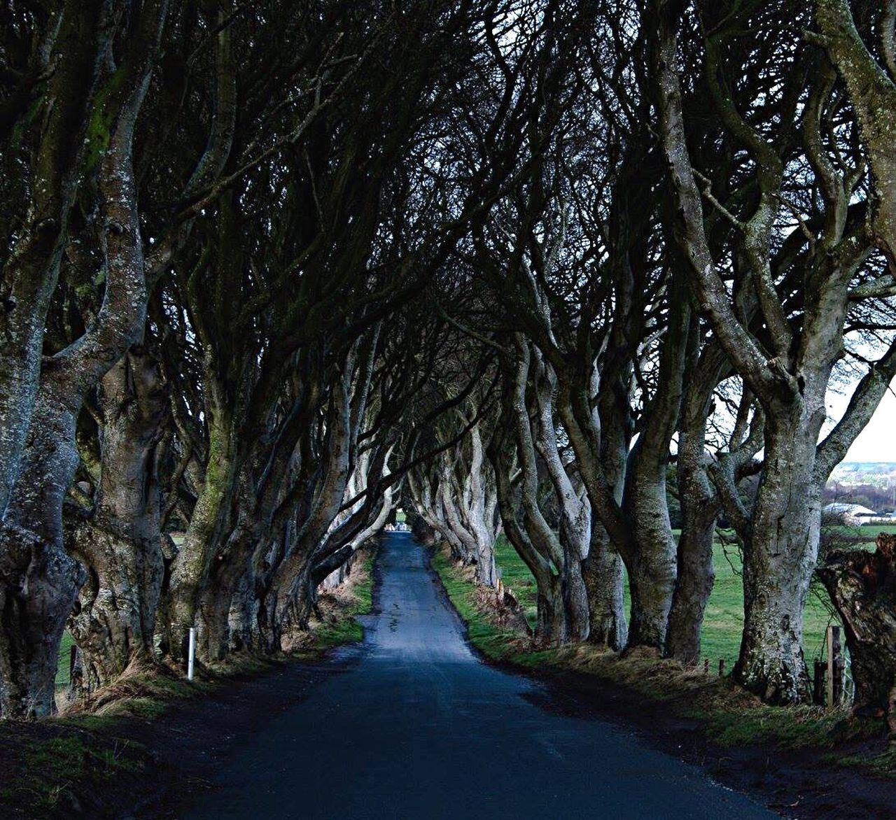 Dark Hedges The Way Forward Tree Road Treelined Beauty In Nature Nature Nature Photography Outdoor Photography Nature_collection TreePorn Tree Tunnel Top Eyem Best Shots Nature_collection Eye4photography