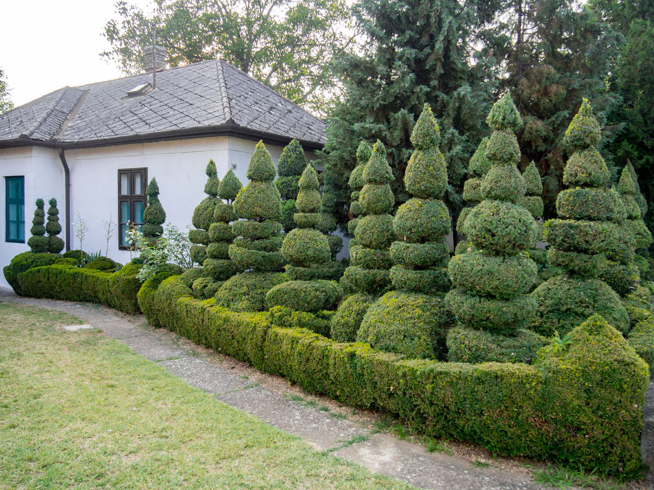 Boxwood Building Exterior Bushes Bushes And Trees Bushes With Fresh Green Leaves Buxus Cottage Cottage Life Day Evergreen Garden Garden Art Garden Life Grass Green Color Nature No People Old House Outdoors Quirky Shapes Shrub Tree Trimmed Unusual