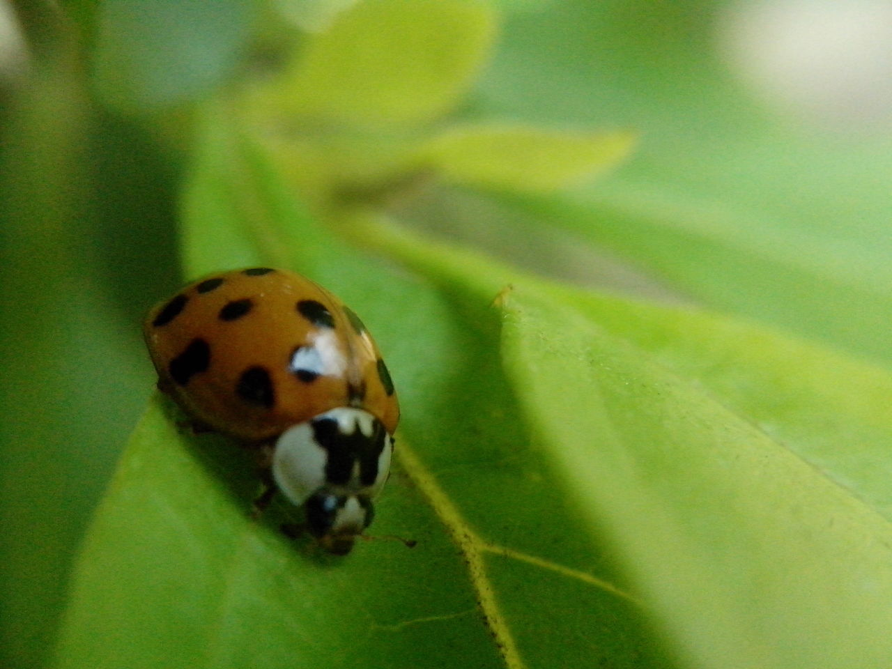 one animal, insect, animal themes, animals in the wild, leaf, close-up, nature, green color, no people, day, outdoors, fragility, beauty in nature
