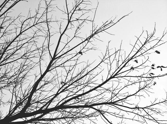 Nature_collection Blackandwhite EyeEm Nature Lover Tree_collection  Trees Minimalist Photography  EyeEm Best Shots - Minimalist