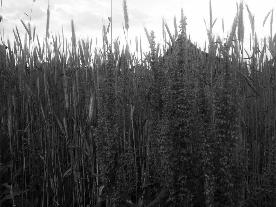 Mobilephotography Blackandwhite Field House Peace Shades Of Grey