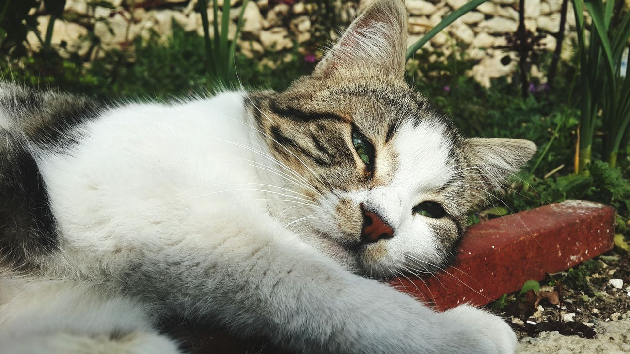One Animal Animal Themes Animals In The Wild Mammal No People Outdoors Close-up Nature Day First Eyeem Photo Photography Samsung Galaxy S4 Kadrajgezginleri Kadraj_turkiye Kadrajımdanyansıyanlar Cat♡ Cats Of EyeEm Cats 🐱