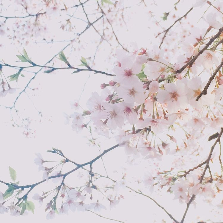 Nature Flowers Enjoying Life Taking Photos