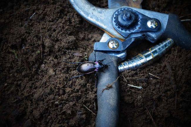 June Bug Outdoors Dirty Close-up Nature Dirt Crawling