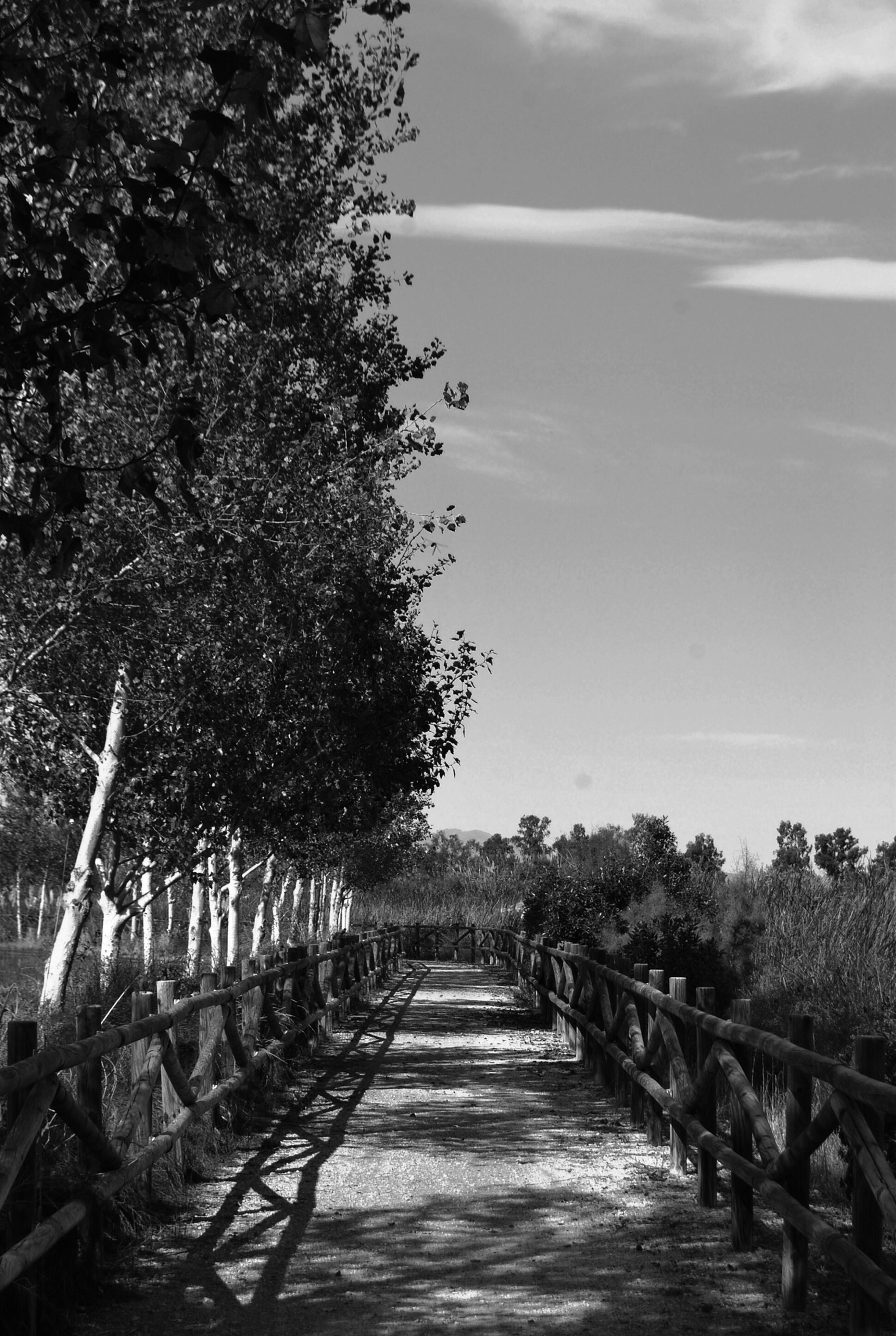the way forward, tree, sky, diminishing perspective, tranquility, vanishing point, tranquil scene, footpath, growth, nature, walkway, pathway, railing, landscape, beauty in nature, scenics, narrow, day, wood - material, outdoors