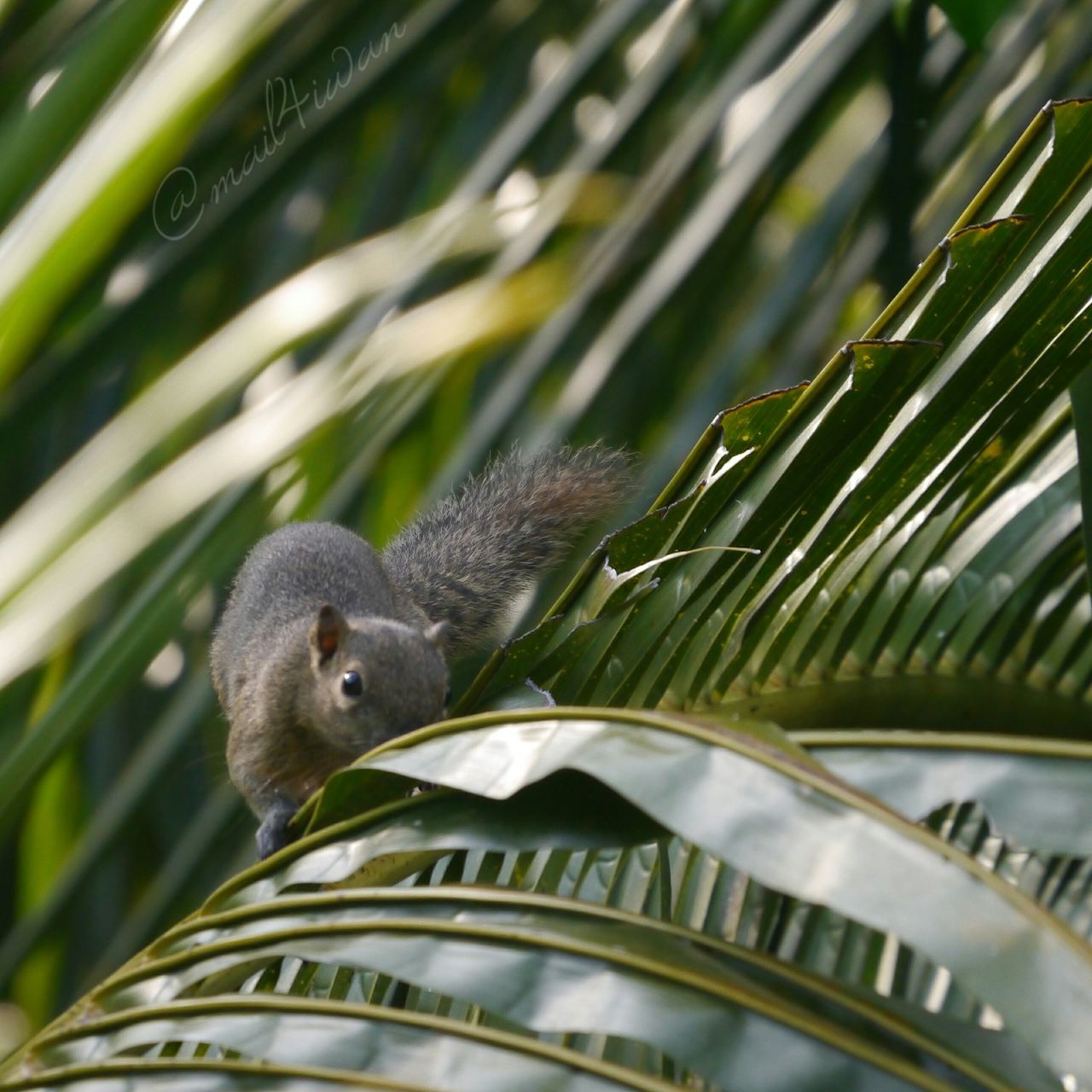Animal Wildlife Animal One Animal Animals In The Wild Close-up Nature Tree Outdoors No People Palm Tree Day Bird Animal Themes