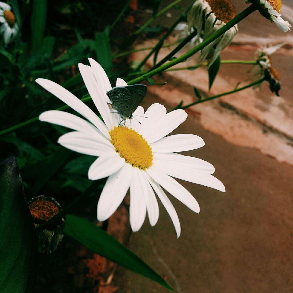 ? Buterfly Flower