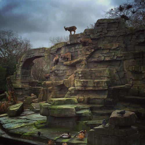 Amsterdam Animals Zoo Artis