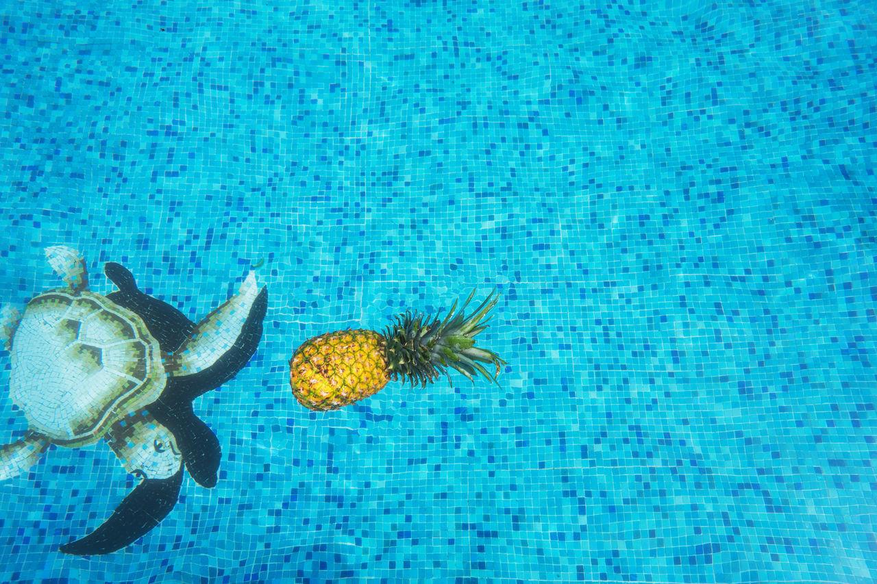 Beautiful stock photos of schildkröte, Amphibian, Animal Themes, Animal Wildlife, Animals In The Wild