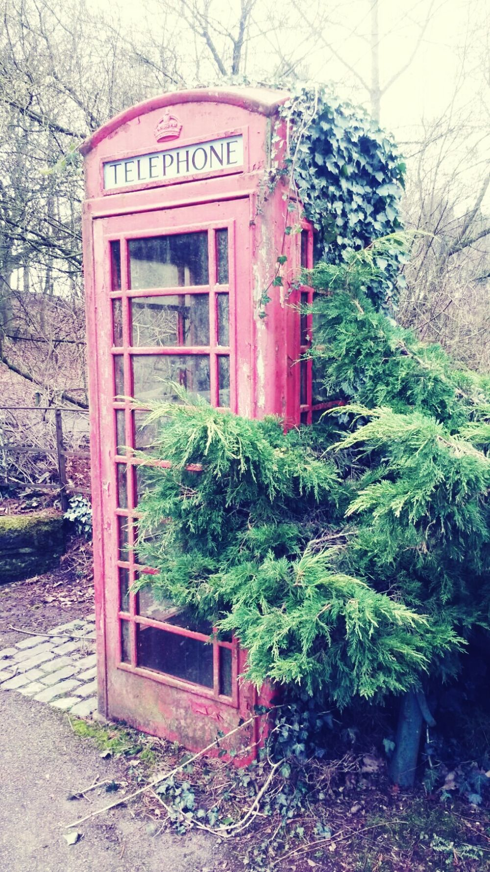 Outdoors Growth Plant Communication Telephone Booth Red Telephone Box Retro Telephone Countryside Grass No People British Scenes Nature Countryside