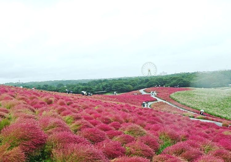 Cloud - Sky Flower Crop  Outdoors Tree No People Beauty In Nature Growth Day Sky Red Flower Redglow Japan