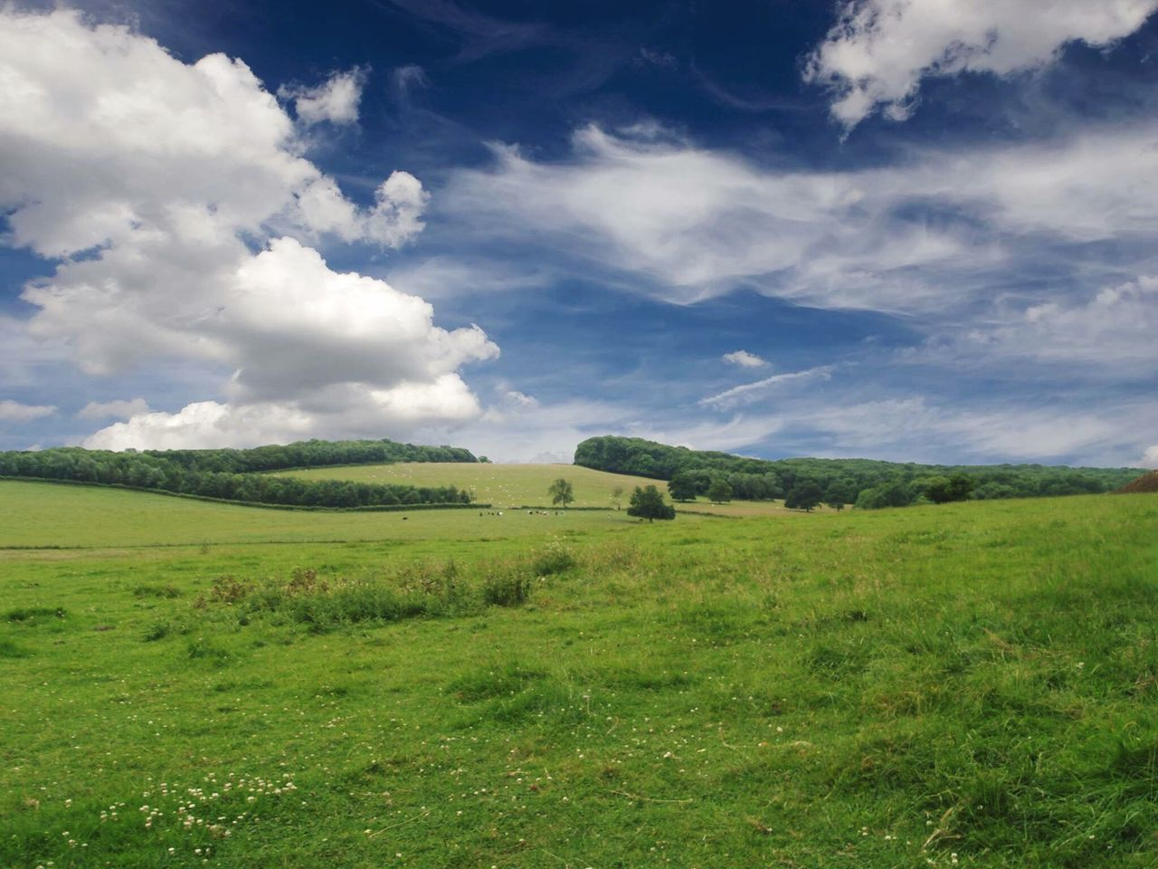 grass, landscape, field, nature, green color, no people, scenics, sky, beauty in nature, tranquility, day, outdoors
