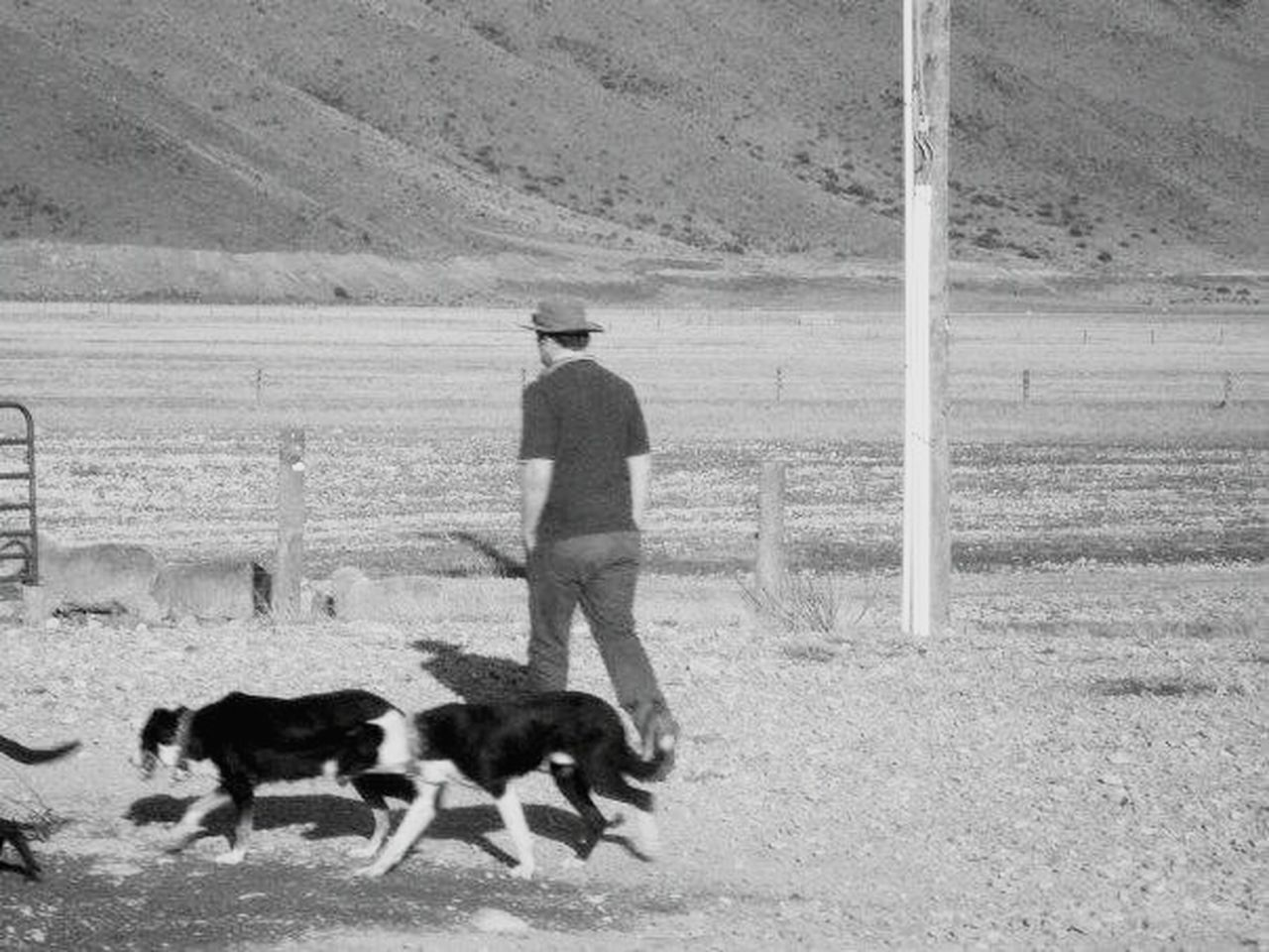 dog, pets, one man only, only men, adult, adults only, one person, domestic animals, people, outdoors, men, one animal, full length, mammal, day, nature