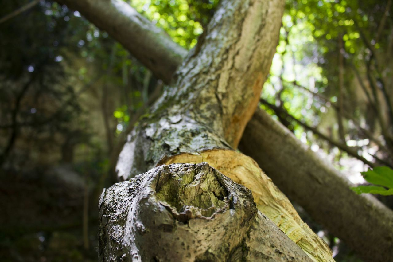 tree, tree trunk, nature, focus on foreground, day, moss, outdoors, no people, growth, close-up, beauty in nature, forest, branch