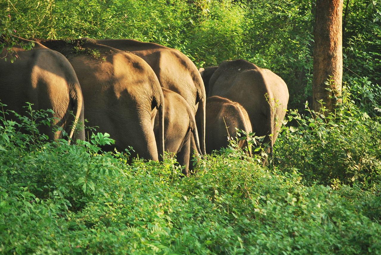 Beautiful stock photos of pflanzen, Animal Themes, Animal Wildlife, Animals In The Wild, Bandipur National Park