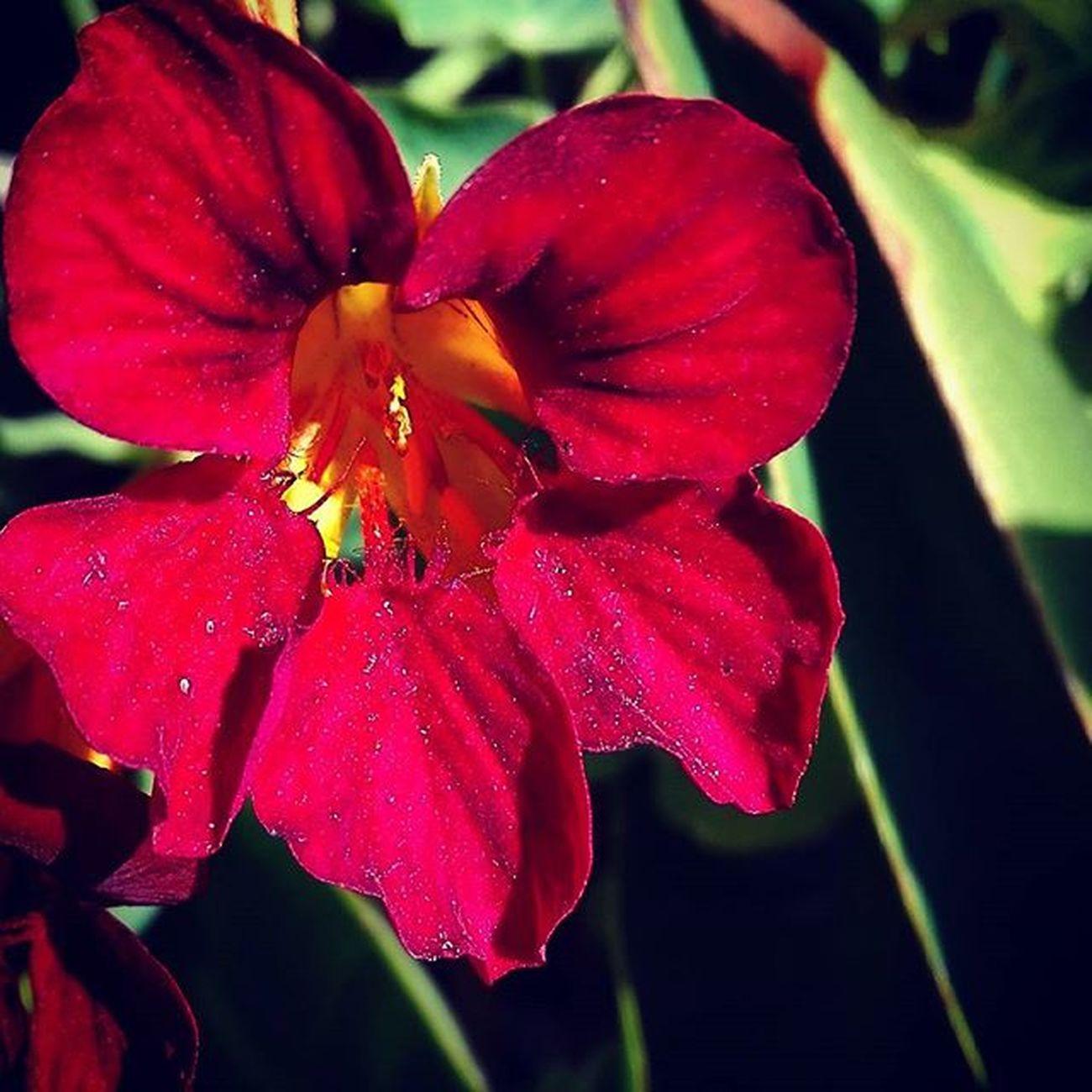 Af_floral➡🌼flowers Red Flower 9Vaga_ColorRed9 Nature Tt_wt_rflora Ptk_flowers_red1 Hello_red