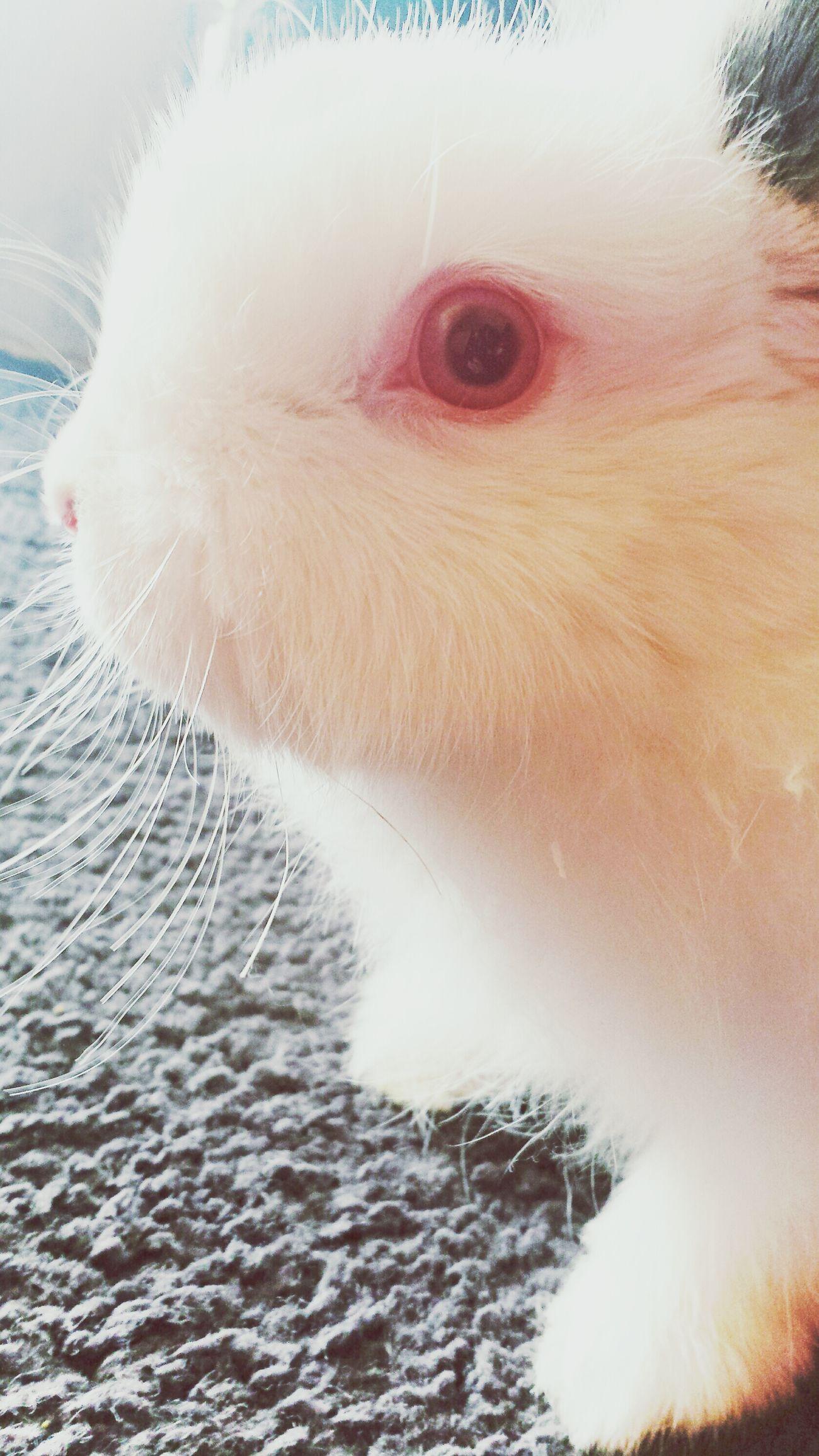 Rambo Cute Pets Bunny