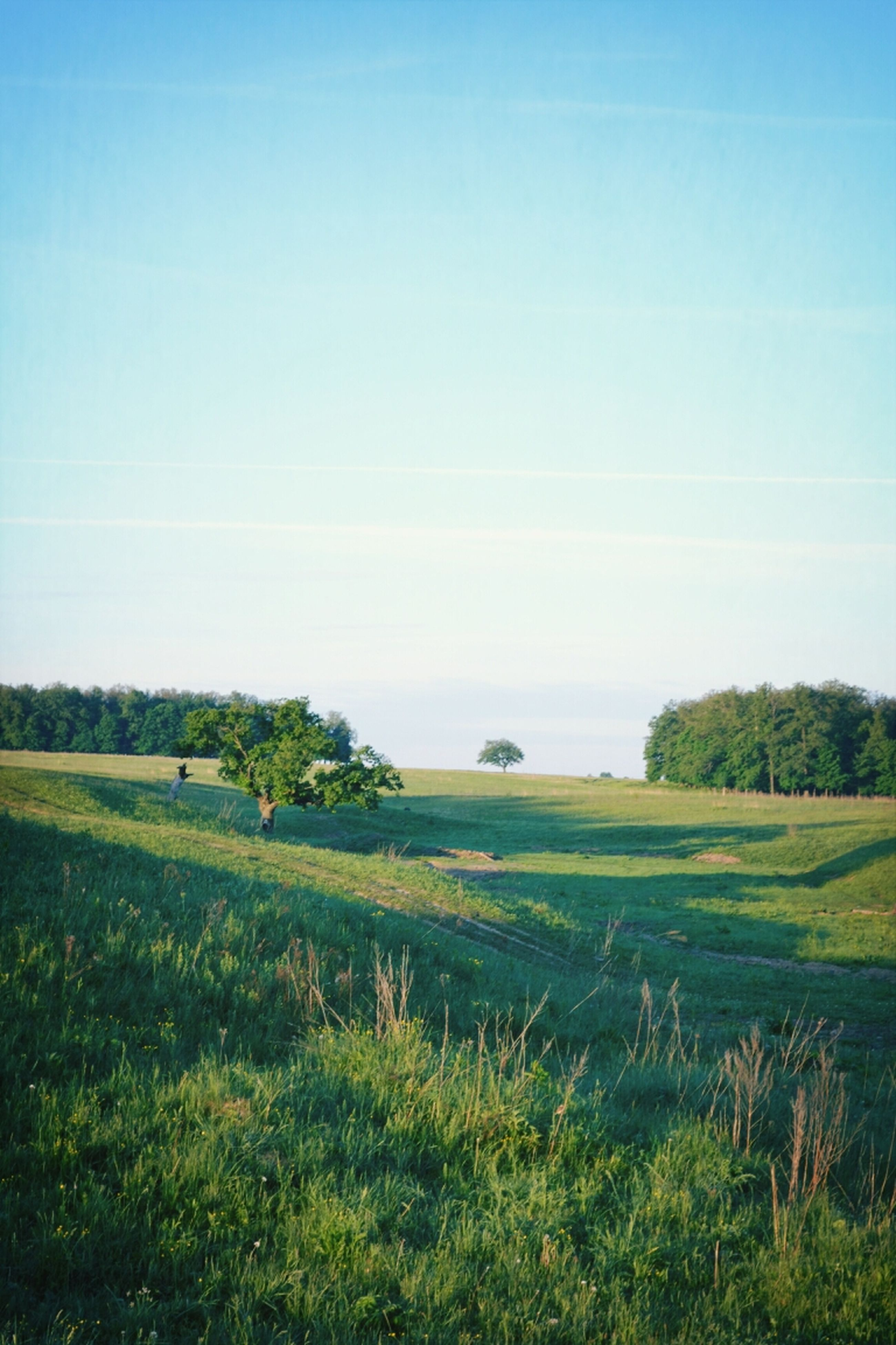 tranquil scene, tranquility, field, landscape, blue, beauty in nature, scenics, grass, growth, nature, tree, clear sky, copy space, green color, rural scene, sky, agriculture, idyllic, plant, day