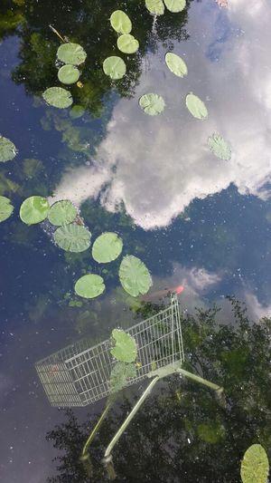 Spiegelwirr. Glattwasser. Bilderlagen. Bilderwagen. Water Reflections Nature Colors Peace And Quiet no filter