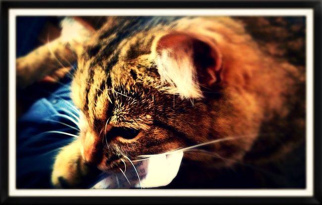 Мой добрый кот