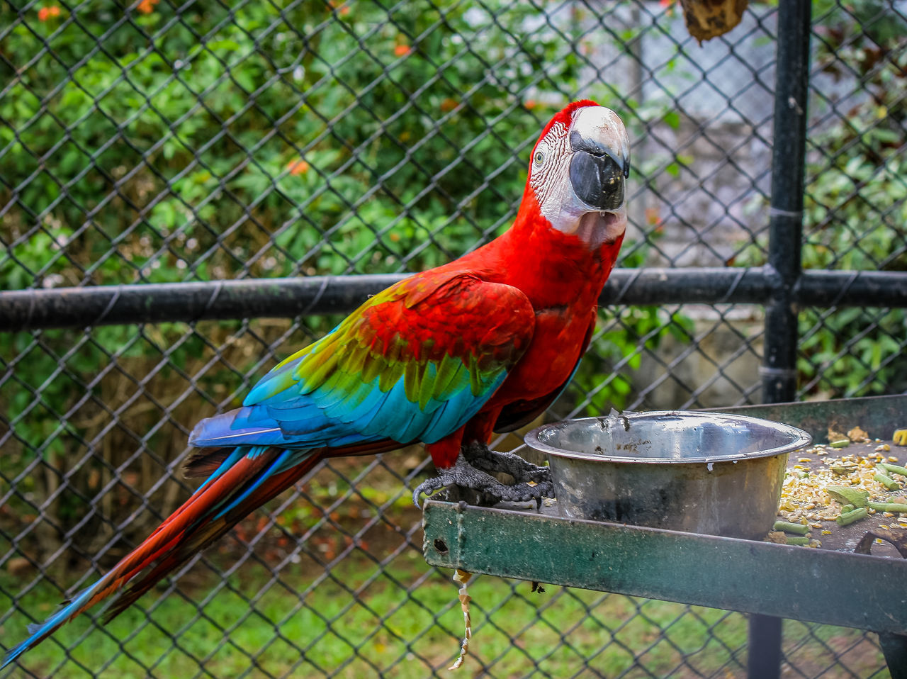 Taking Photos Relaxing Check This Out Enjoying Life Trinidad And Tobago Nature Photography Zoophotography Zoo Animals  Birds🐦⛅ Emperorvalleyzoo Bird Posing Zoo Photography