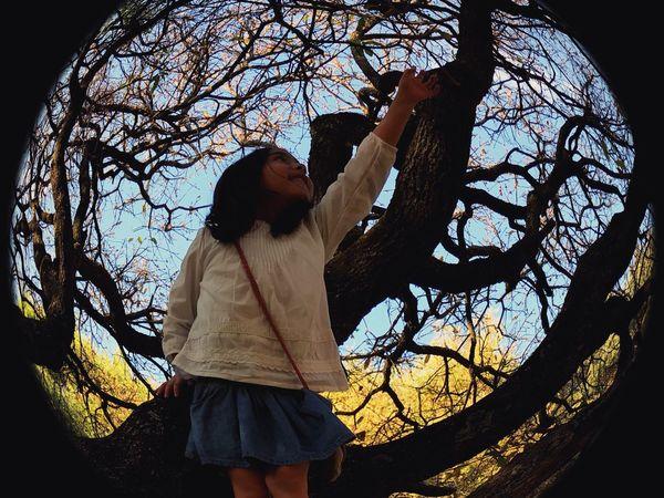 Eyefish Girl Tree
