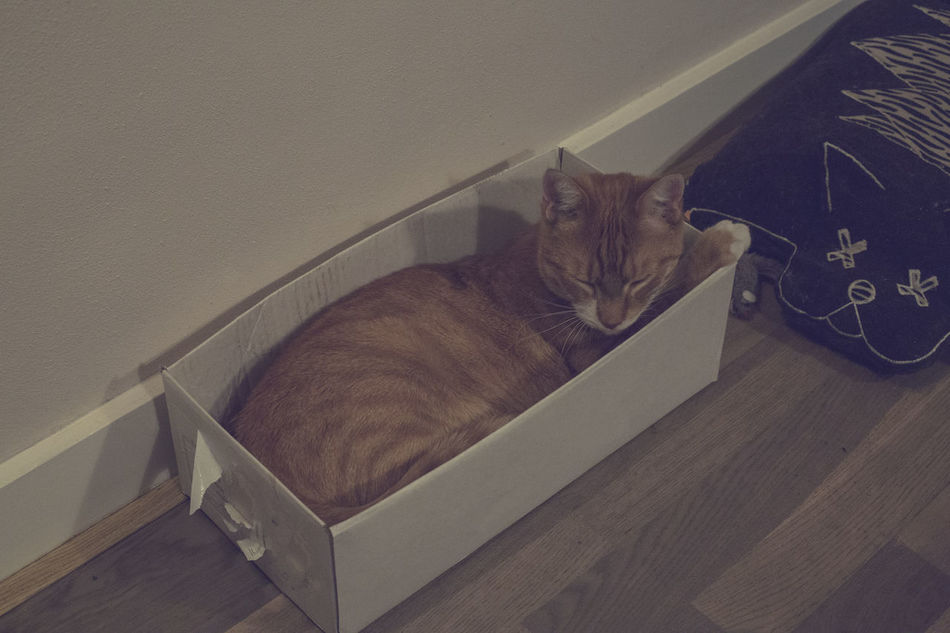 Red cat sleeping in small box Box Carton Box Cat Pet Ready Sleeping, Red Small Thugmophilia