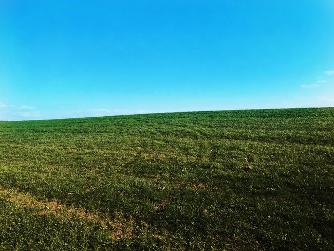 Windows XP 📷:LG G Flex 2 WindowsXP Background Agriculture Field Crop  Growth Farm Rural Scene Green Color Nature Beauty In Nature Scenics Outdoors Landscape Day Sky No People Clear Sky Freshness Grass Summer Likeforlike Like4likes Follow4follow Like4like