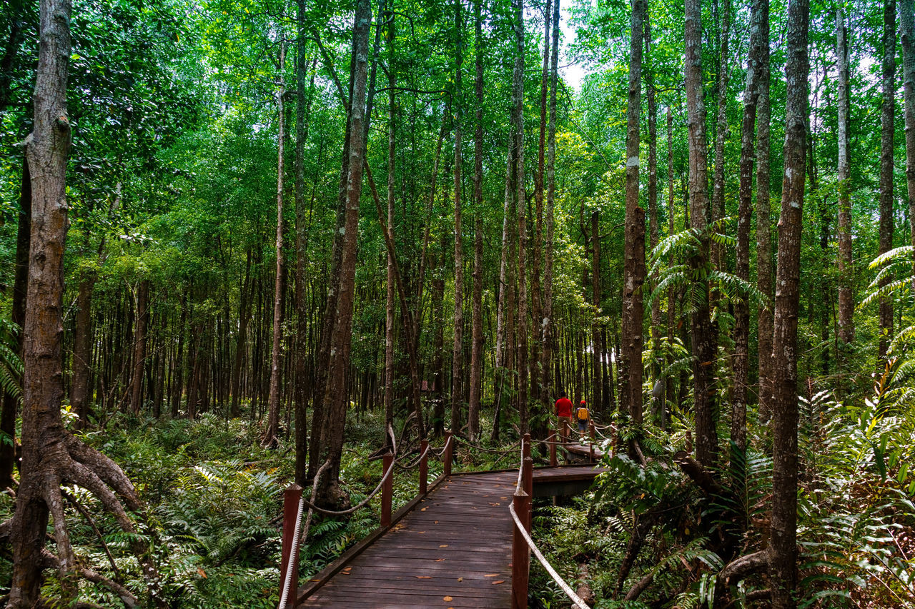 forest, tree, nature, growth, beauty in nature, tranquility, tranquil scene, the way forward, bamboo grove, outdoors, bamboo - plant, day, tree trunk, scenics, footbridge, no people