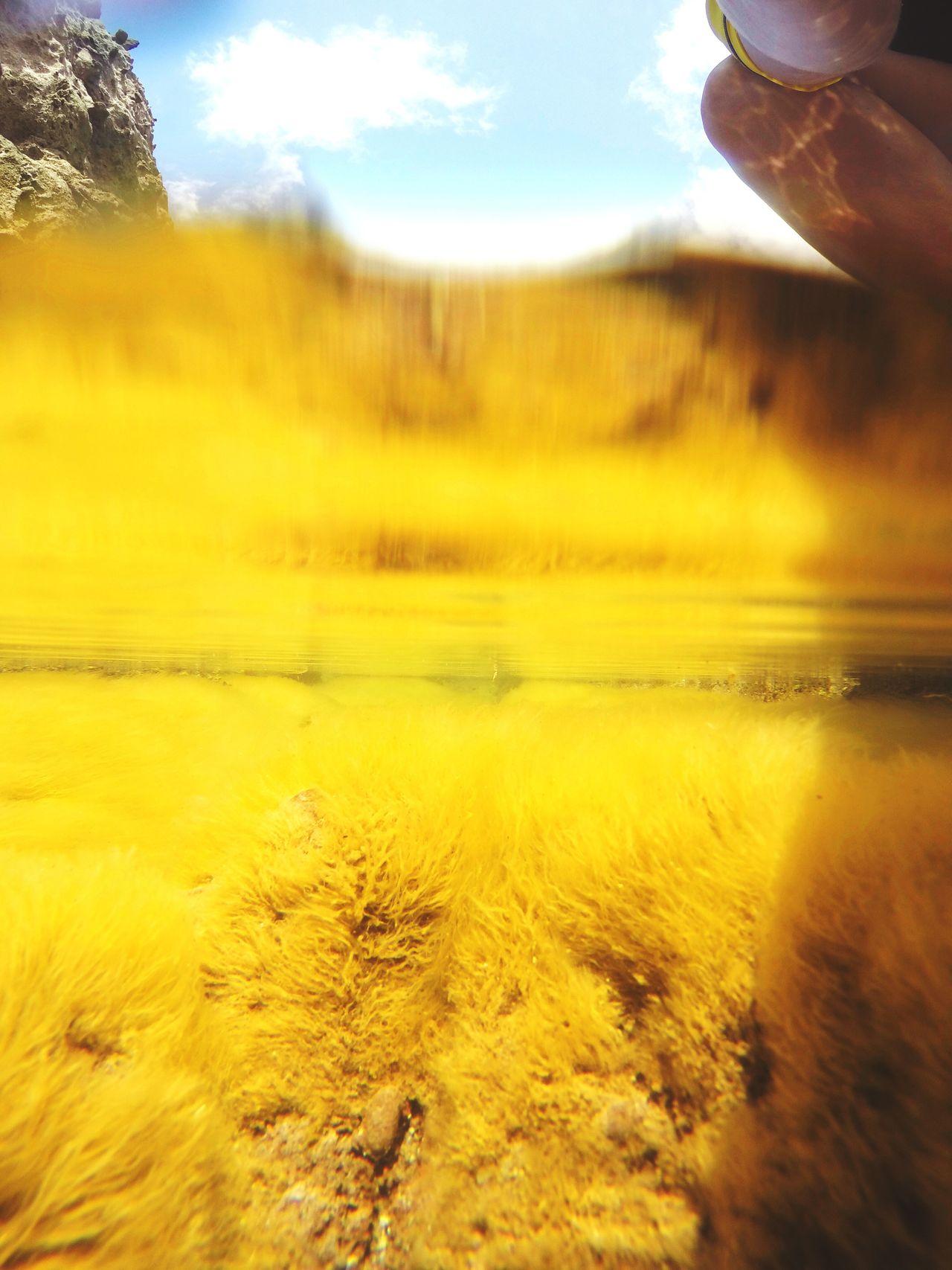 Tidepools in Saba Tidepool Sea Life Nature Water Underwater Beauty In Nature Close-up UnderSea Outdoors EyeEmNewHere EyeEmNewHere