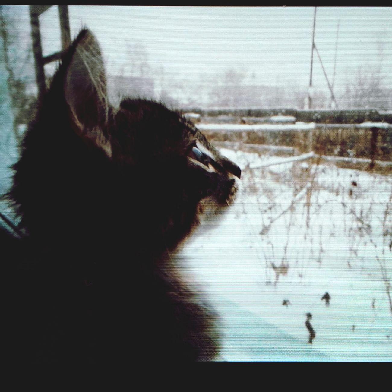 зима мойкотэ ценительприроды Beautiful Day