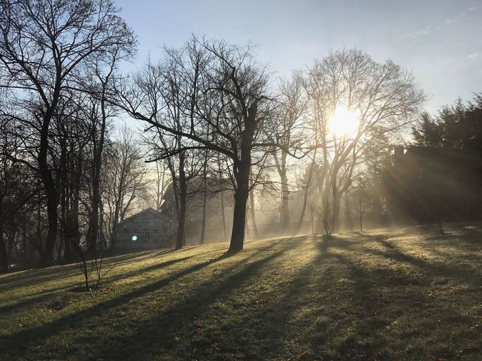 Tree Sun Sunlight Lens Flare Nature Tranquility Bare Tree Sunbeam Tranquil Scene Beauty In Nature Sky No People Growth Outdoors Scenics Landscape Field Branch Grass Day