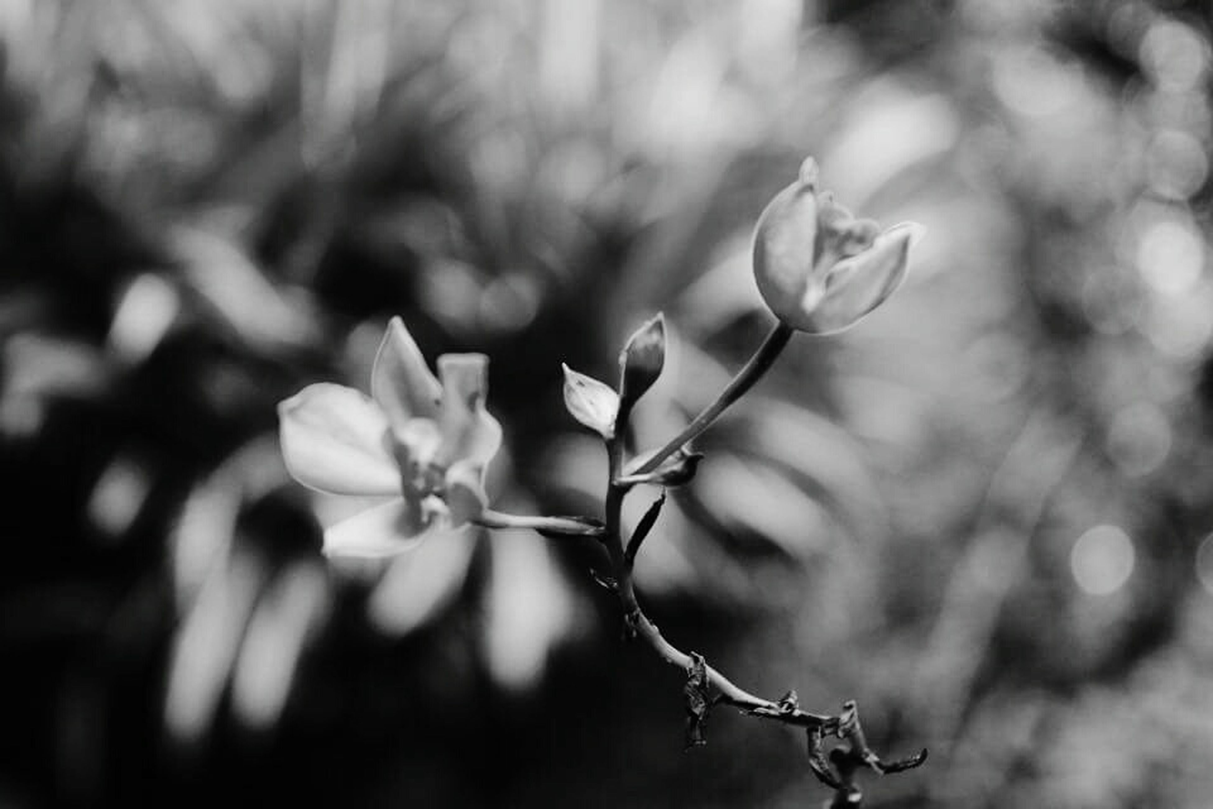 flower, freshness, growth, fragility, focus on foreground, petal, close-up, beauty in nature, nature, flower head, plant, blooming, selective focus, twig, bud, white color, stem, blossom, in bloom, branch