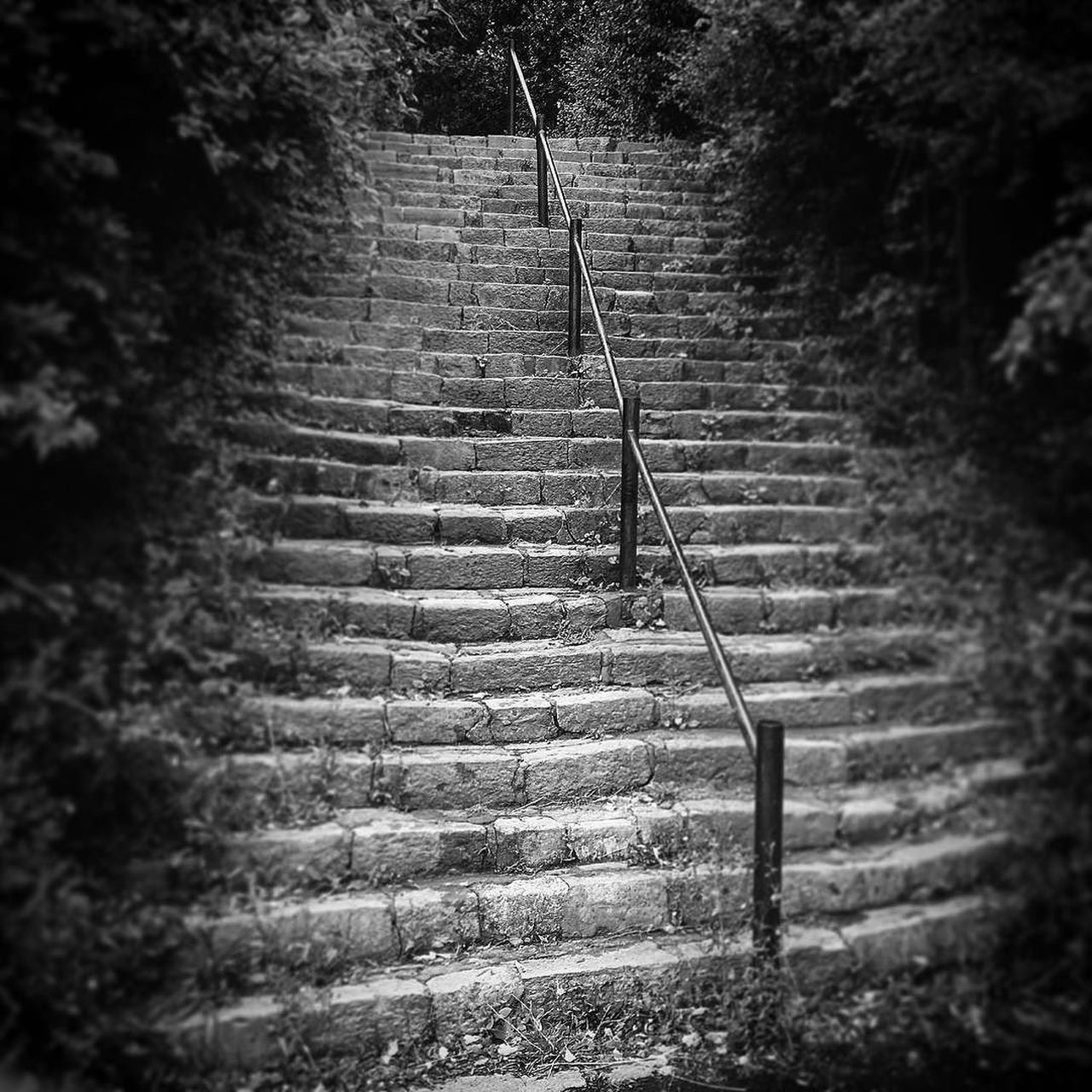 Hilsea Lines Rampart Steps B&W Ancient Monument B&w B&W Collection B&w Photography Day Deterioration Diminishing Perspective Hilsea Lines Hilsea Lines Ramparts Nature No People Old Outdoors Ramparts Steps Stone Steps Vanishing Point