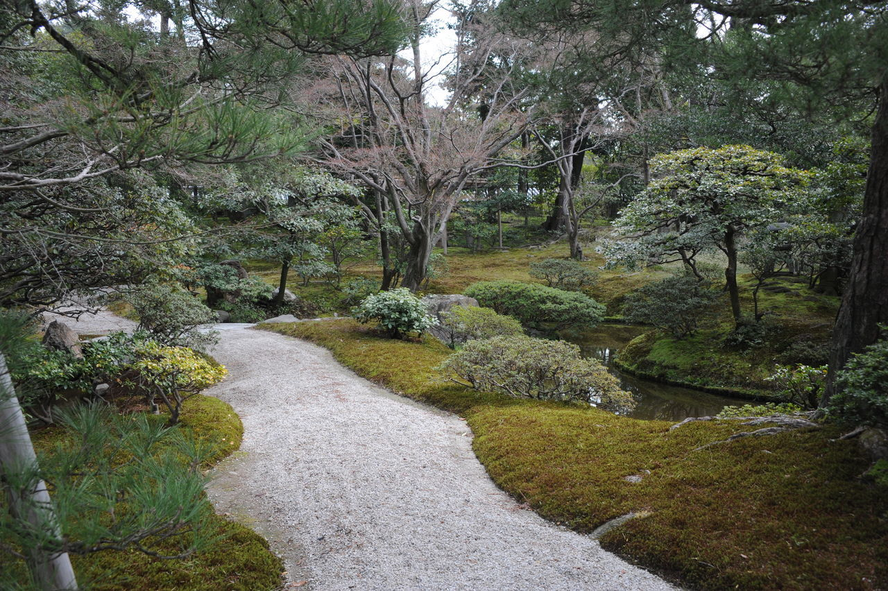 Japanese Imperial Garden Path Beauty In Nature Cultures Day Growth Imperial Garden Japanese Garden Nature No People Outdoors Stone Pathway Tranquil Scene Tranquility Tree Zen Garden