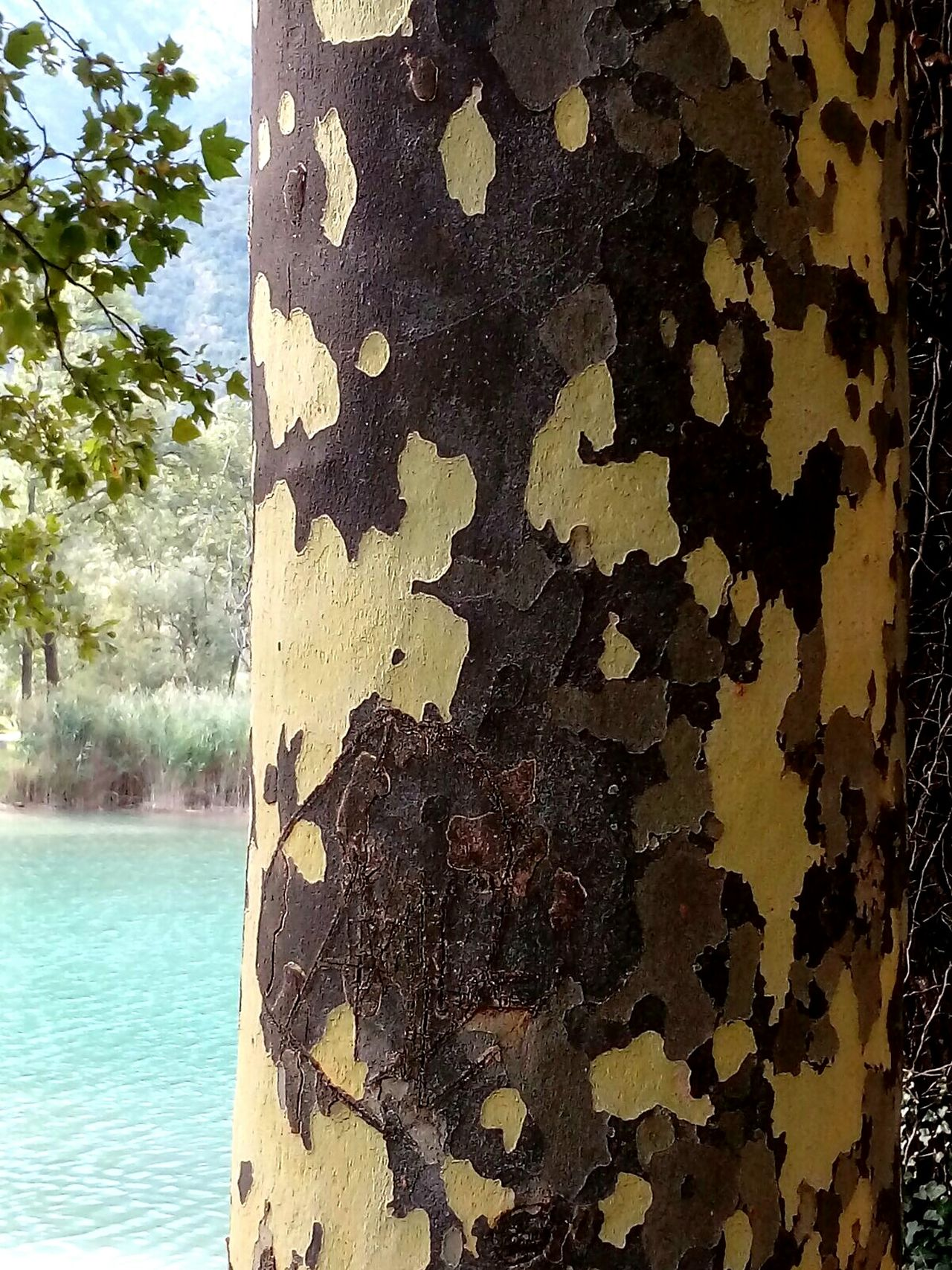 Textures And Surfaces At The Lake Tree_captures Mimetism Mimetic Mimetico Tree Trunk Emerald Lake Wood Textures Trees And Nature Maximum Closeness