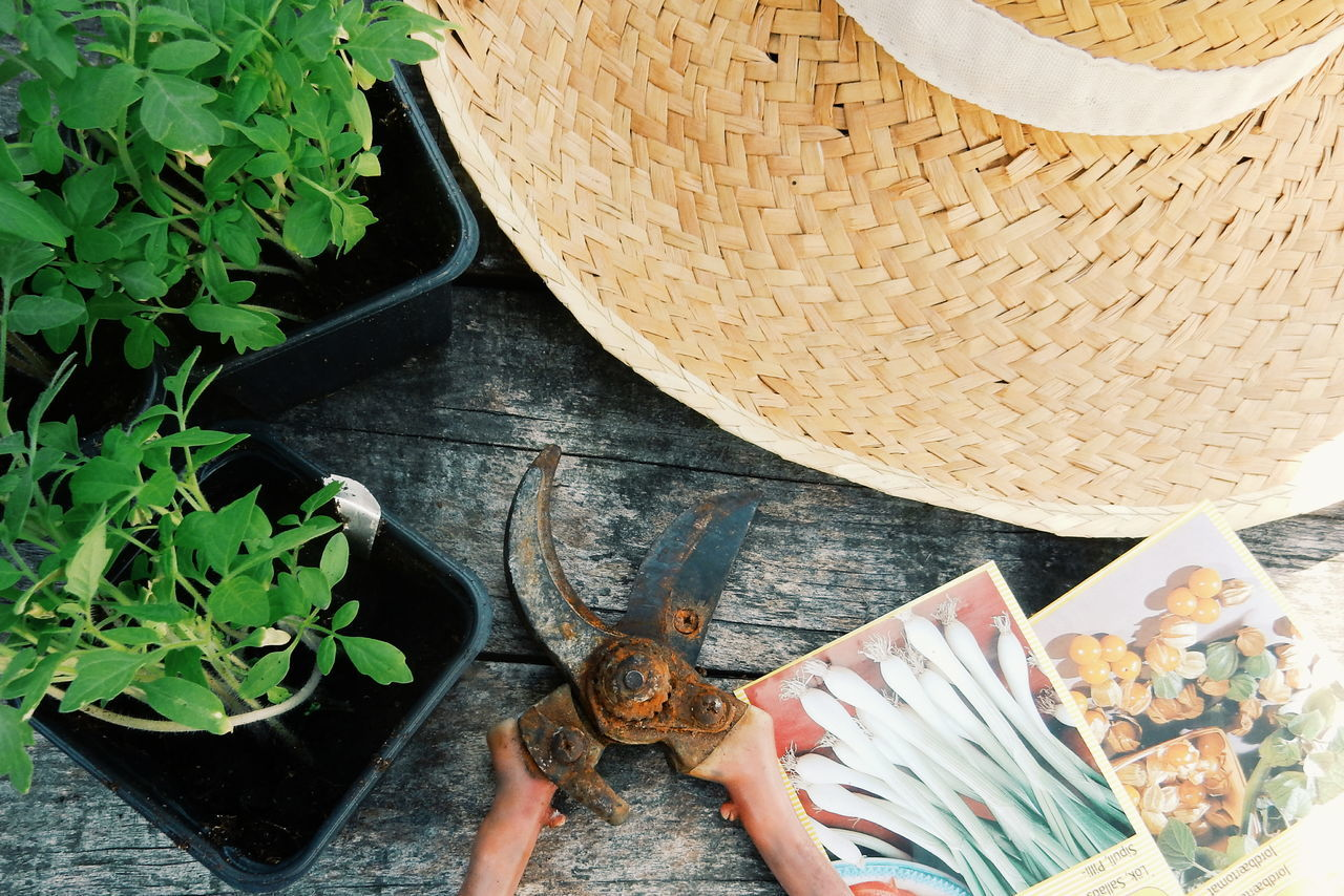 Planting and gardening . to left: gift from a friend, blue tomatoe plant from China! exited! Botanic Botanical Cropped Day Flora Garden Garden Photography Gardenia Lifestyles Nature Nature Outdoors Part Of Personal Perspective Plant Plant Planting Plants Plants And Flowers Seed Seeds