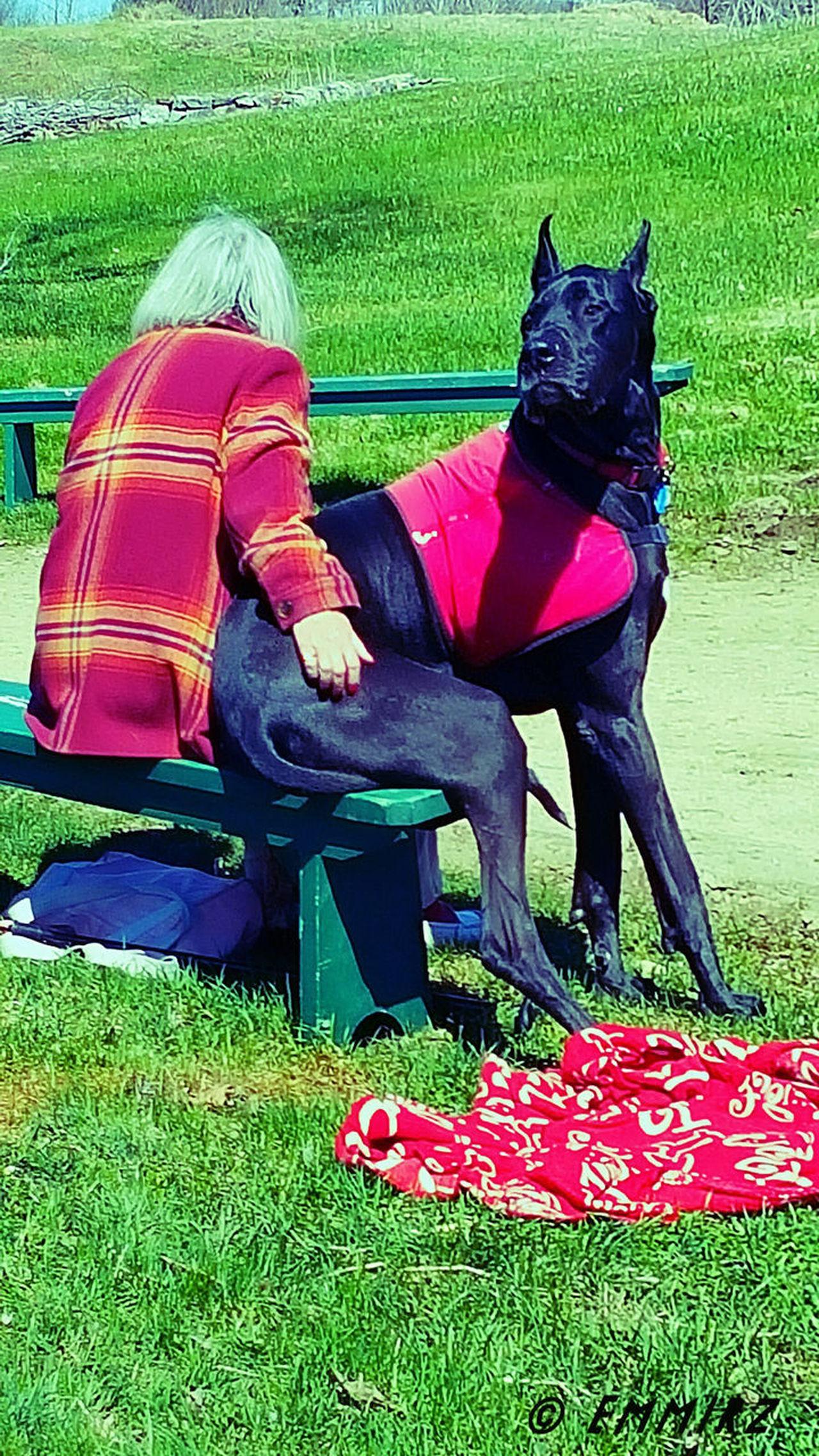 Womans/mans Bestfriend And Protector Bodygaurd Dogslife Doglover Doggy Love Best Friends ❤