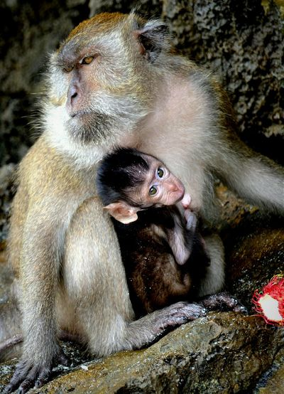 Monkeys Animals Holiday Enjoying Life Nikon The Places I've Been Today Wonderful Phiphiisland Lovely