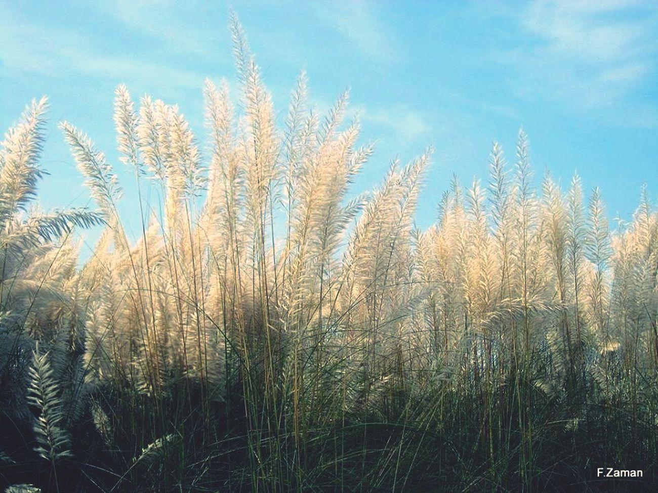 Autumn Durgapuja kashful Blueskyazure
