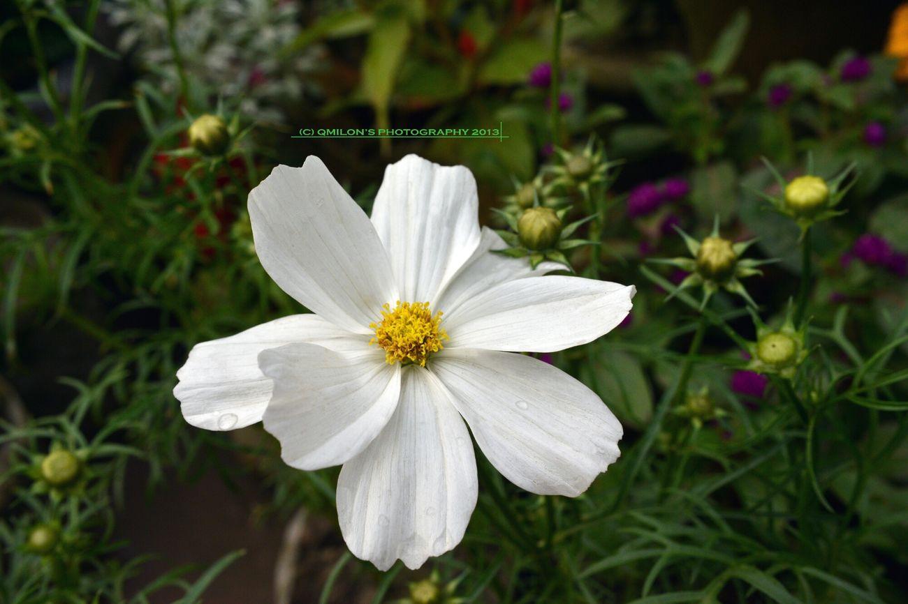 **** for the F R I E N D S, from the bottom of my heart ******* Flower For The Friends EyeEm Nature Lover From The Bottom Of My Heart Flower Collection