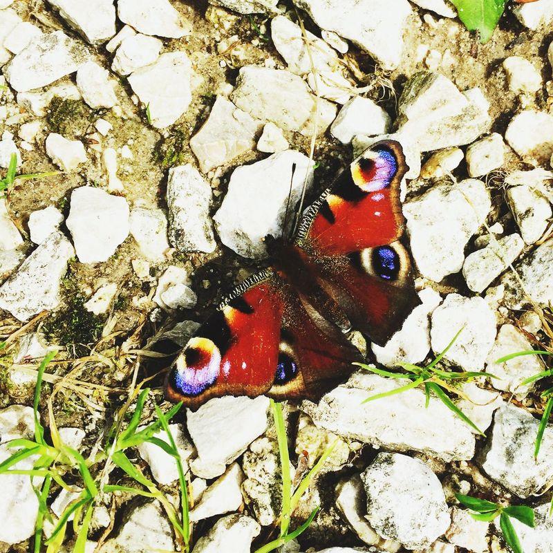 Природа Animal Themes Multi Colored Nature No People