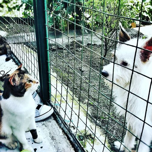 Dog Cage Nature Feline Pets Animal Themes Mammal Fun Day Happy Animal Shelter I ABSOLUTELY LOVE DOGS AND I GOT THIS CUTE SHOT AT THE ANIMAL SHELTER 💓💓 AdoptDontShop