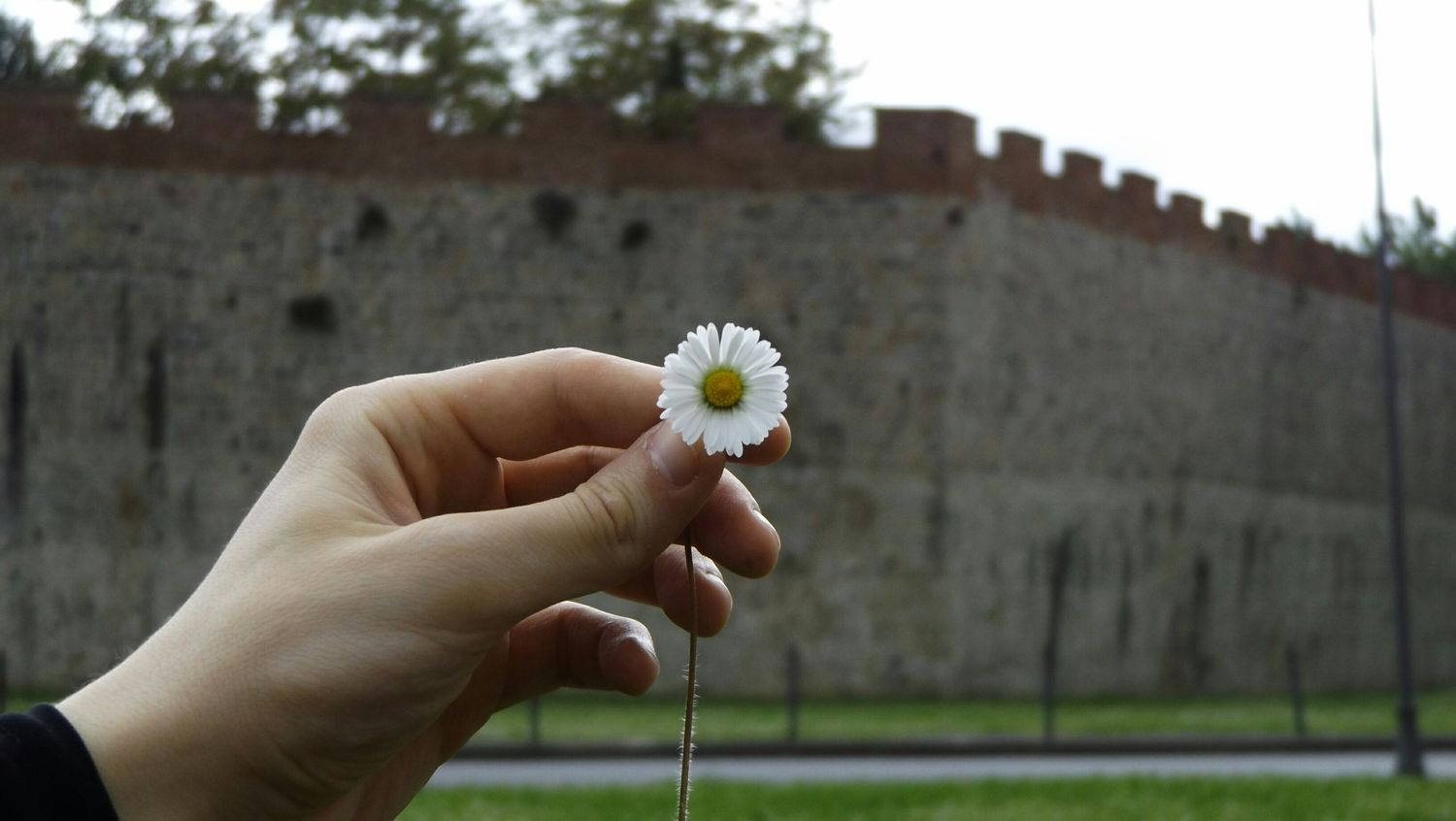 Pisa Walls Daisy Flower Clouds And Sky Taking Photos Walking Around The City  Beautiful Nature Flower Photography